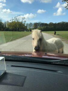 Ham her var godt nok fræk. Han ville overhovedet ikke flytte sig. Vi måtte pænt køre udenom. Det er også hans park  :-)